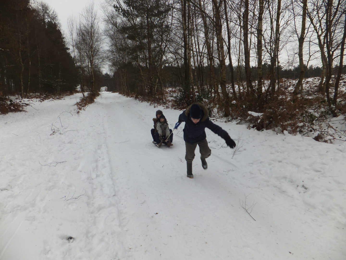 Woodland walks can be taken in all weathers especially the snow when accompanied by a sledge