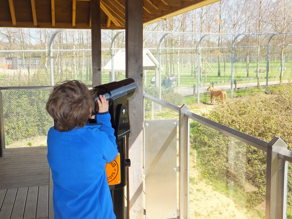 Kaide looking through the telescope at the Lions at Africa Alive