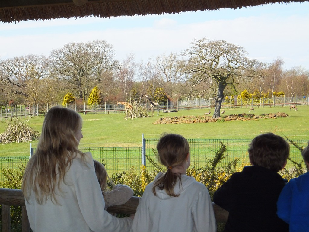 Children looking at the giraffes at Africa Alive