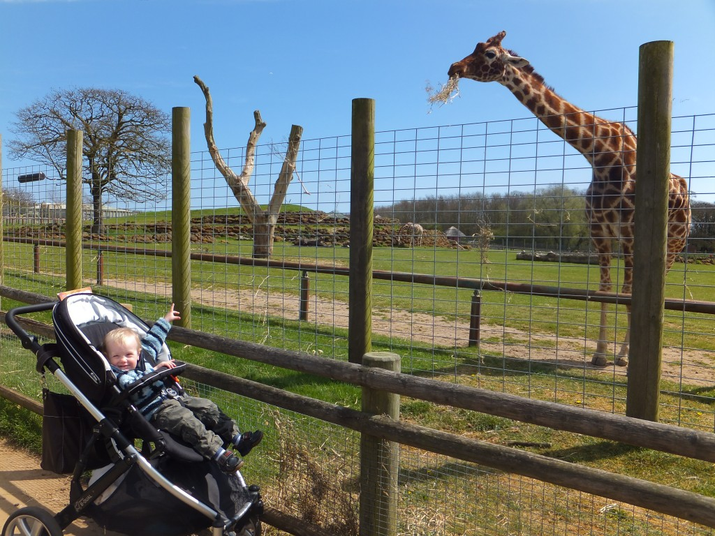 Tyrus smiling and pointing at a giraffe at Africa Alive