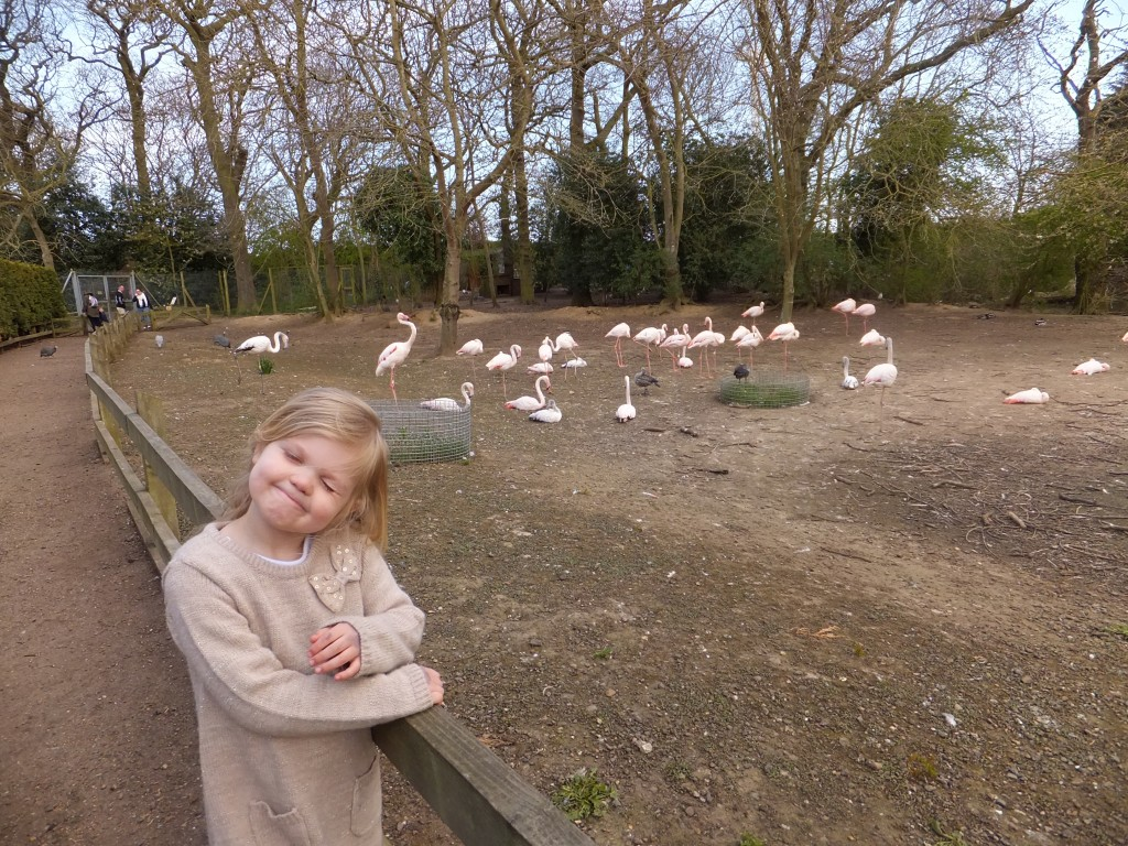 Eowyn standing next to the Flamingos at Africa Alive