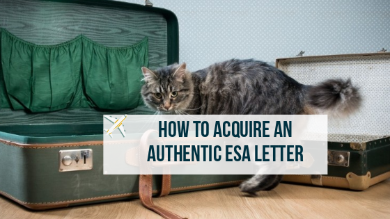 Esa Letter Online How To Acquire An Authentic One