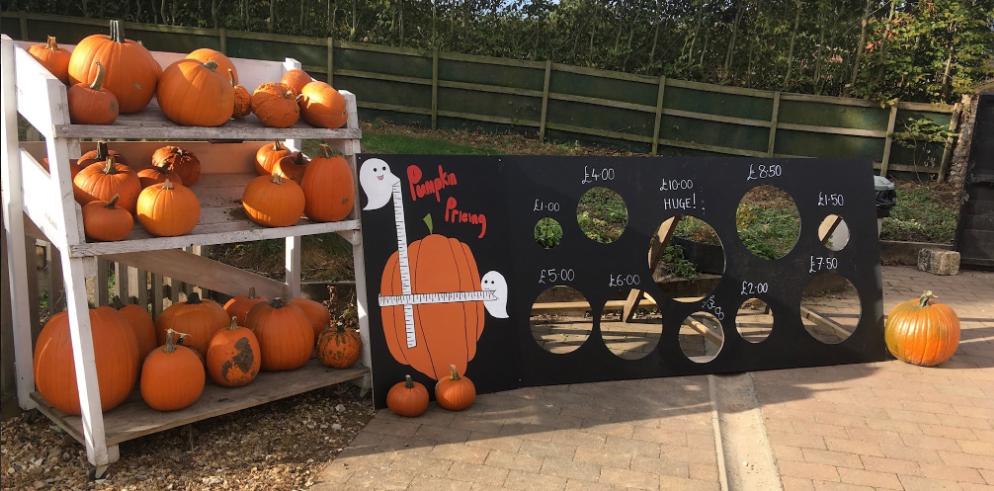 Algy's Farm Shop Pumpkin Patches In Norfolk