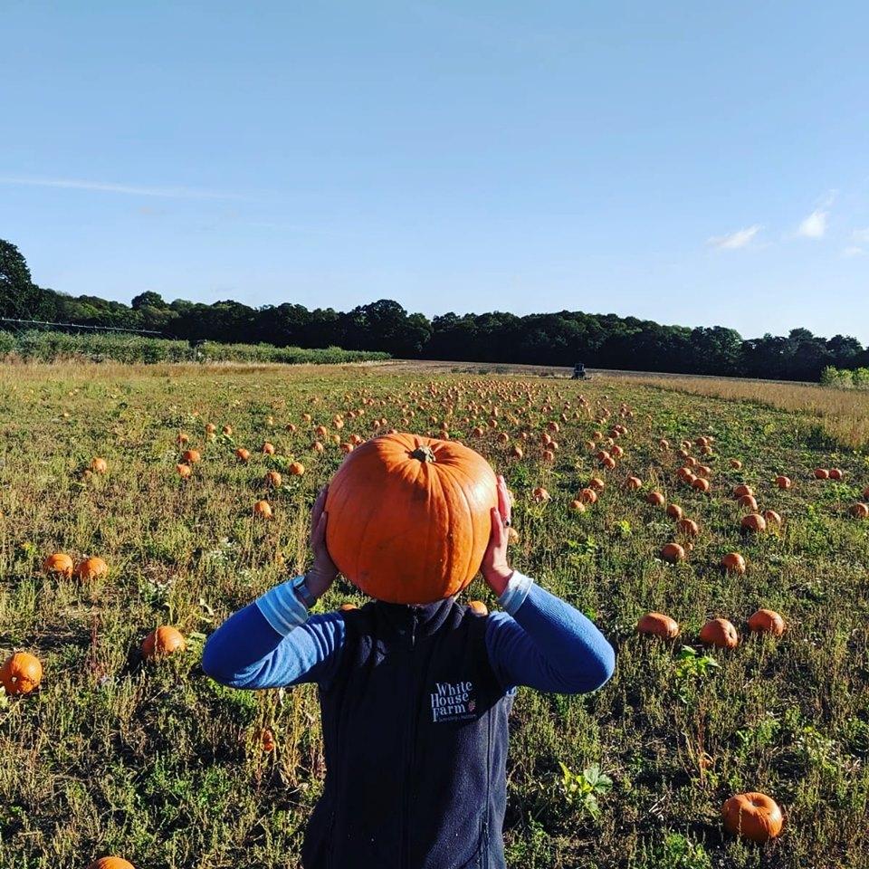 Pumpkin Patches In Norfolk White House Farm