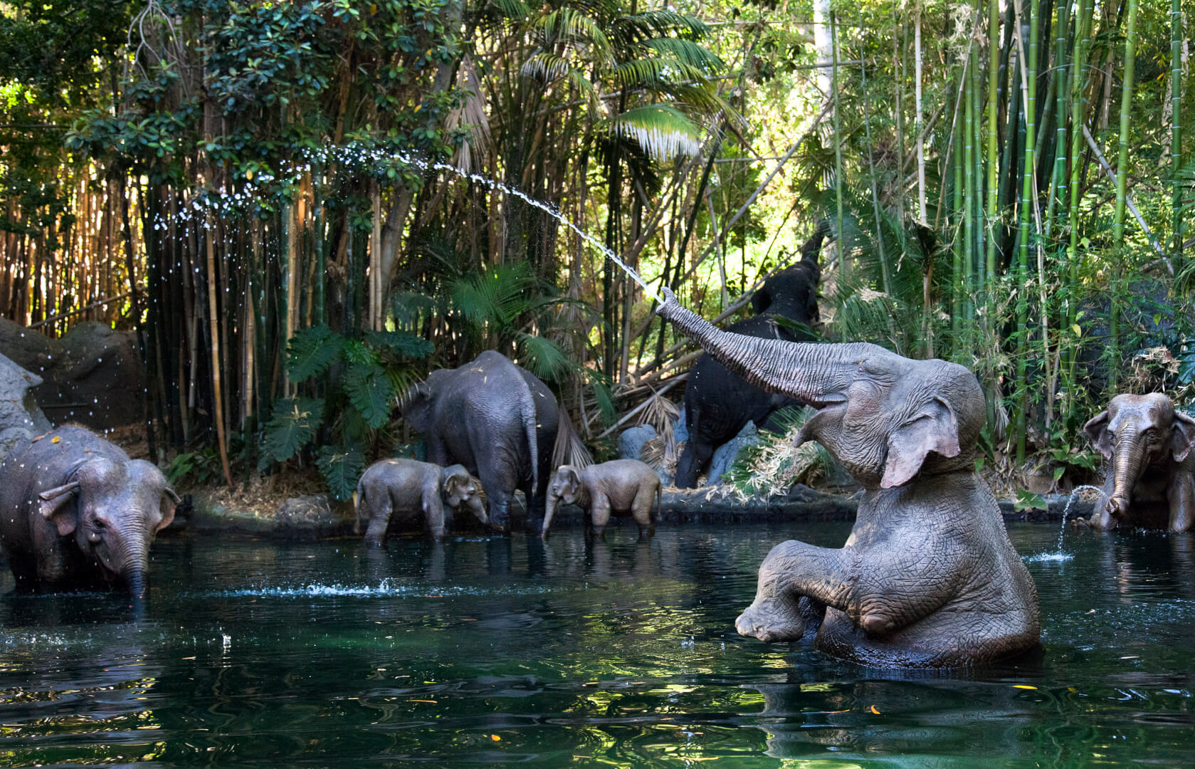 Top Disneyland Attractions The Jungle Cruise
