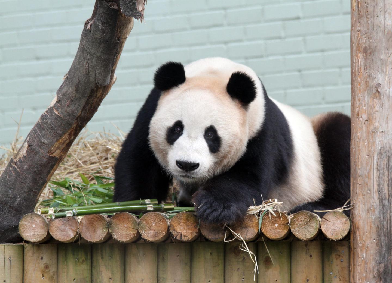 Things To Do in Edinburgh with Kids - Edinburgh Zoo