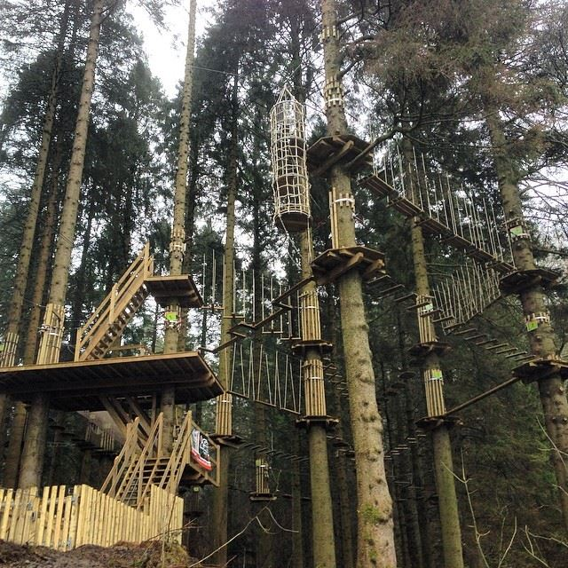 Things To Do in Lake District - Go Ape Grizedale