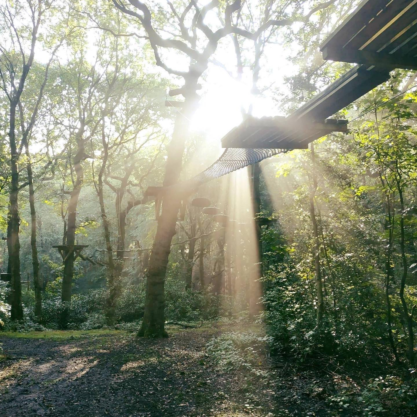 Things To Do With Kids in Manchester - Treetop Trek Manchester